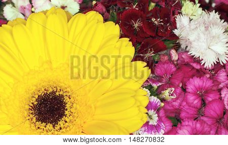 Yellow gerbera flower Yellow gerbera flower background