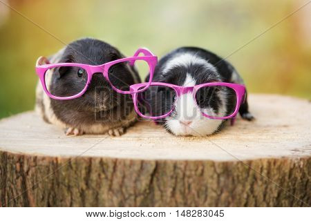 two guinea pigs in pink glasses outdoors