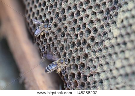 Empty honeycombs are filled by bees .