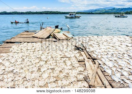 Egret perched near fish drying in sun by water on Rio Dulce, Livingston, Guatemala
