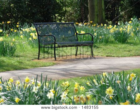 Parkbench With Daffodil Flowers