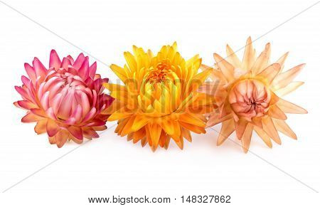 Dried Flowers. Three dry flowers isolated on white.