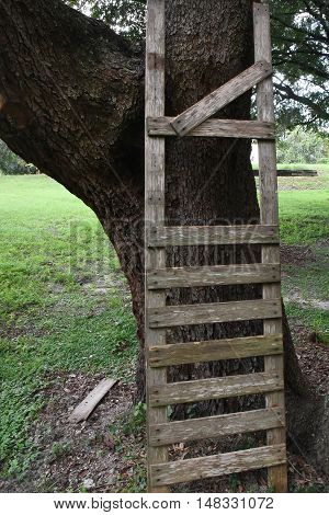 Broken wooden ladder with rungs missing against an oak tree