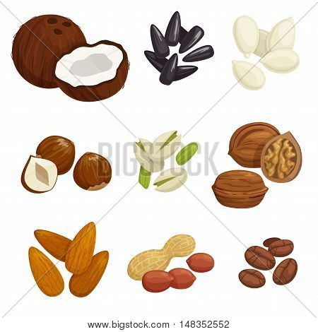 Nuts, grain and kernels. Vector icons of coconut, almond, pistachio, sunflower seeds, pumpkin seeds, peanut, hazelnut walnut coffee beans