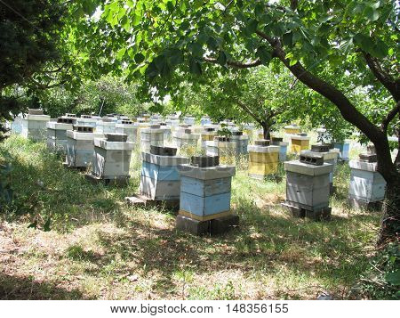 Apiary in the garden. Montenegro summer, Sunny