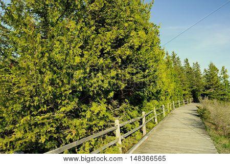 Boardwalk in forest at Presque Isle, MI, USA