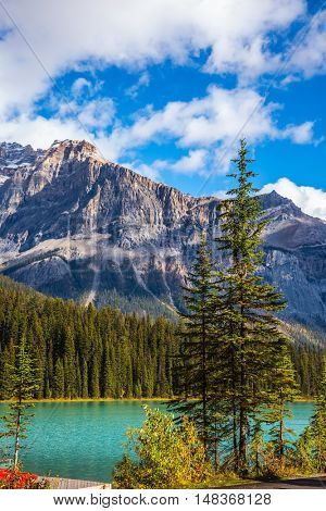 Mountain Emerald Lake, Canada, Yoho National Park. Picturesque lake with emerald water surrounded by a pine forest