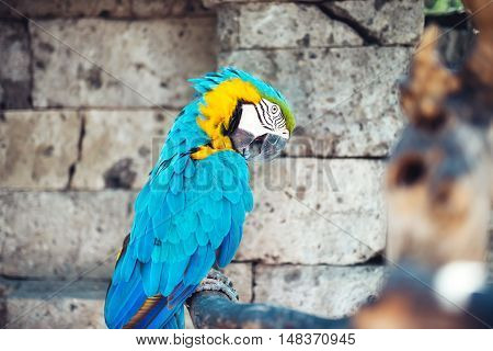Portrait Of Macaw Parrot Sitting In Forest. Aviary Details Of Rainforest
