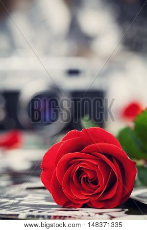 Red rose and vintage camera on wooden board, photography creative concept.