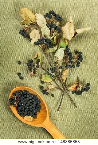 Chokeberry aronia . Dried herbs for use in alternative medicine spa herbal cosmetics herbal medicine preparing infusions decoctions tinctures powders ointments butter tea bath.
