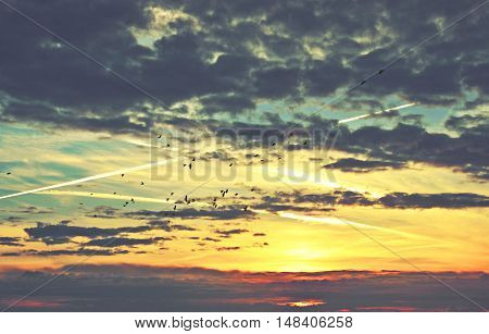 Flock of birds silhouetted against a cloudscape and contrail sky at sunrise