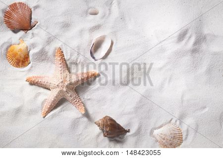 Topview of sea shells with sand beach as background and copyspace. Summer concept
