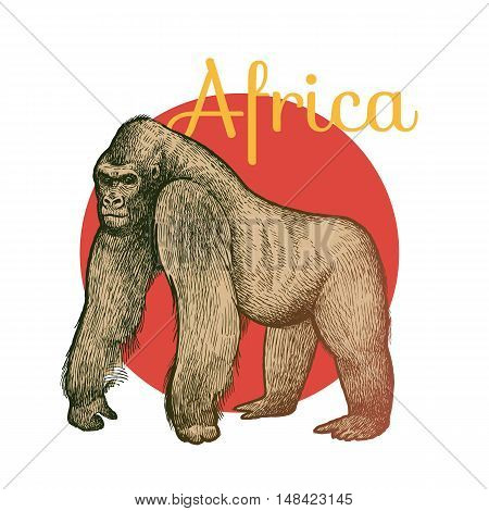 African animals. Gorilla. Illustration Vector Art. Style Vintage engraving. Hand drawing.
