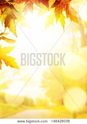 art sunny autumn backgrounds with yellow leaves