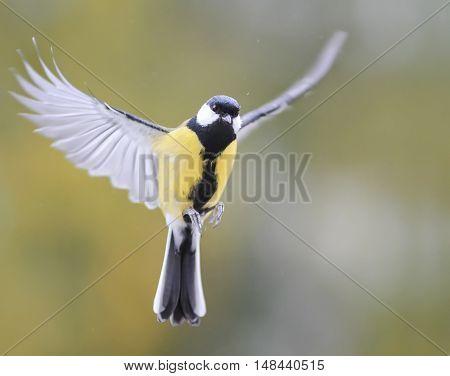 the bird flies on the wings closeup
