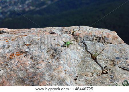green lizard on white rocks on mountain peak Ai-Petri in Crimea in summer
