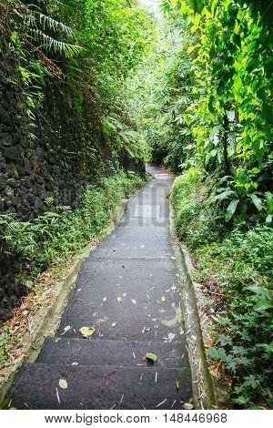 Green Dark Tropical Jungle Pathway (bali, Indonesia)