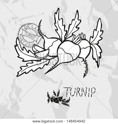 Hand Drawn Turnips