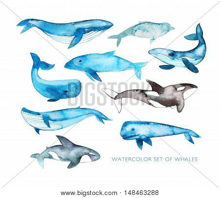 Collection of hand drawn watercolor whales. Ink illustration. Hand drawn animals elements for your design.