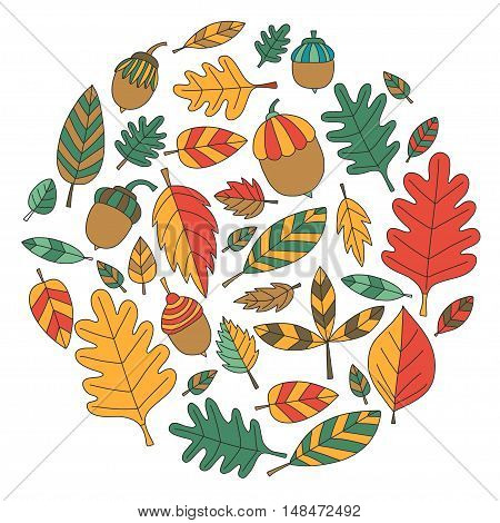 Pattern with autumn leaves Oak Mapple Acorn Linden Vector images