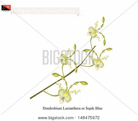 Papua New Guinea Flower Illustration of Dendrobium Lasianthera or Sepik Blue Orchid. The National Flower of Papua New Guinea.