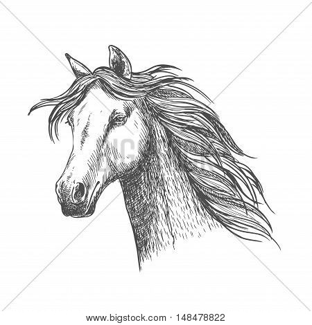 White graceful horse with waving mane along neck. Mustang stallion sketch portrait with wise eyes and calm glance