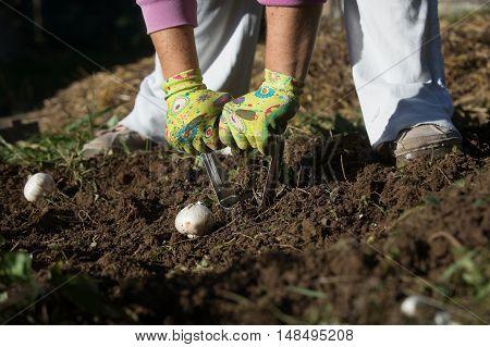 Bulb Planter