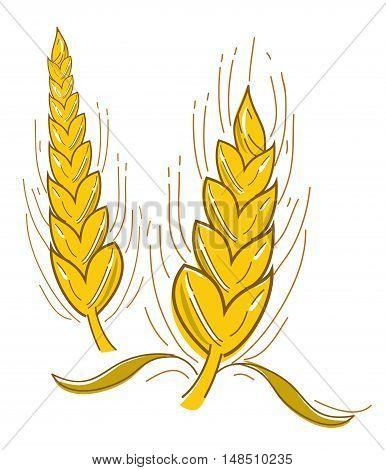 Golden colour wheat in graphic form design