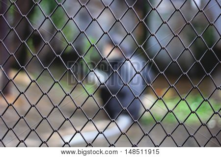 blur animal in the cage in zoo, black bear