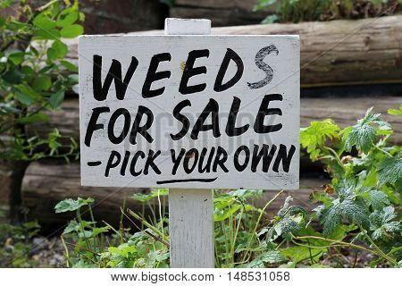 Sign, weeds for sale - pick your own , in a garden, humor used in a gardening joke