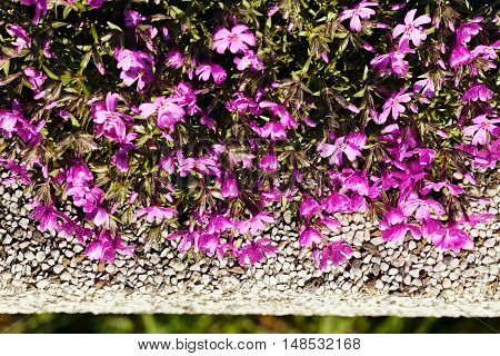 Small Shrubby Pink Flowers