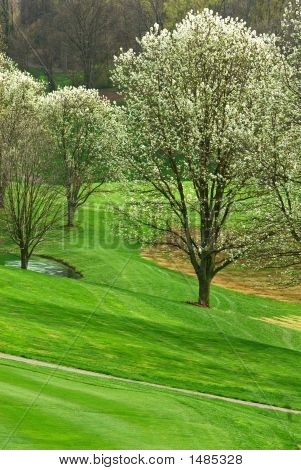 Golf Course In Springtime