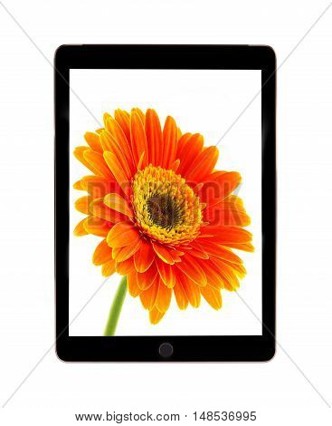 Tablet computer with flower daisies. Gerbera flower