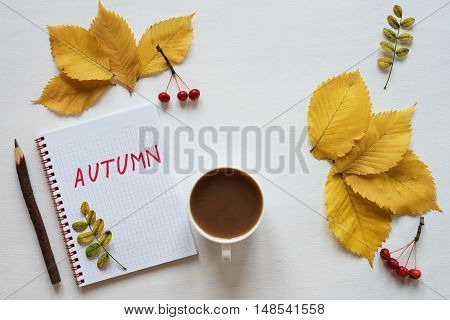 Autumn yellow leaves and small red apples, rennet , a cup of coffee and a notebook on a white board. The word Autumn is written in the notebook.