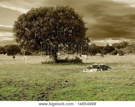 A oak and horses in gray tones poster
