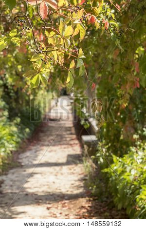 background landscape grape flavors in the alley in the garden of the monastery Templar Convent Cristo, Tomar, Portugal