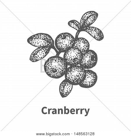 Vector illustration doodle sketch hand-drawn cranberry with leaves and branches. Isolated on white background. Berry painted dots and lines. The concept of gardening and harvesting.
