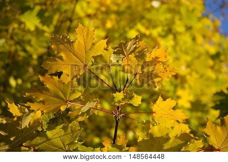Autumn leaves. Natural seasonal colored background. October.