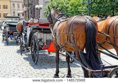 Horses are harnessed to carts for driving tourists In Prague Old Town Square. Czech Republic.