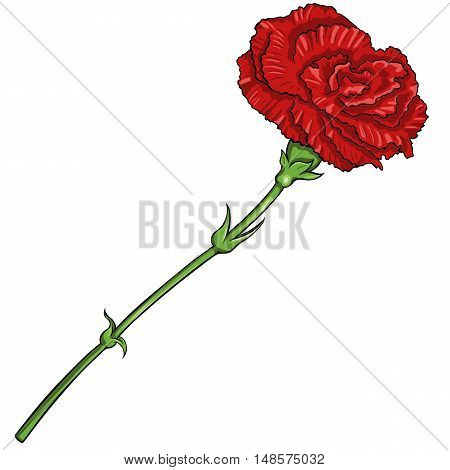 Vector Cartoon Isolated Illustration - Red Carnation
