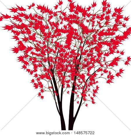 Card with autumn maple tree. Red maple trees in the middle. Japanese red maple. Vector illustration