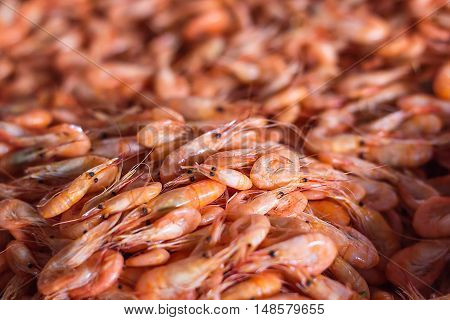 Shrimps background texture. A lot of sea shrimp or pattern of krill. Sea food like shrimp or krill on the street food festival. Steaming prawns. Shot with a selective focus.
