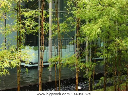 Modern zen decor home with bamboo greenery and water