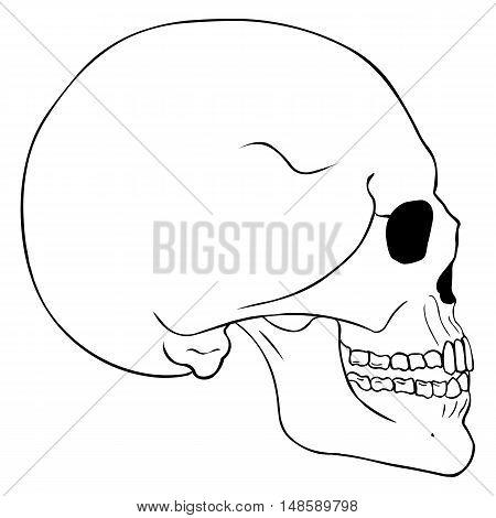 Vector Line Art Side View Skull