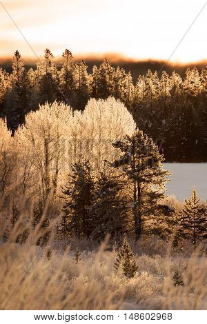 Winter sunrise on frosted trees in Teton National Park