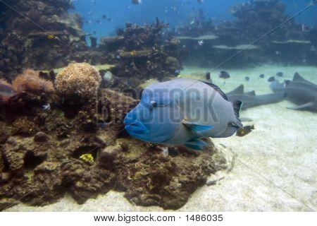 Grouper1