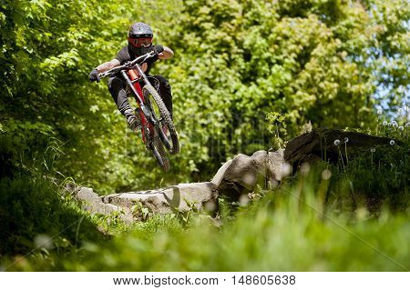 Mountainbiker rides nad jumps in sunny forest