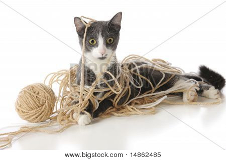 Tangled-up Kitty