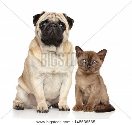 Kitten And Dog Together