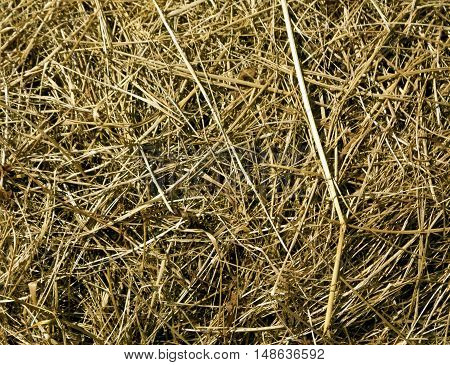Dry Faded Grass Texture.